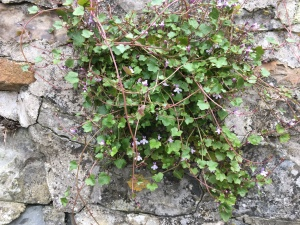 Flora on stone wall