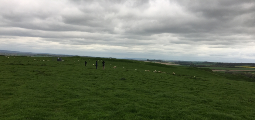 Maiden Castle with sheep
