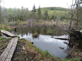 Arriving at the beaver pond.
