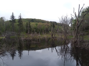 View over main pond to Rounds Rock.