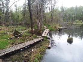 Note boardwalk across main beaver dam, but to left note a lower pond.