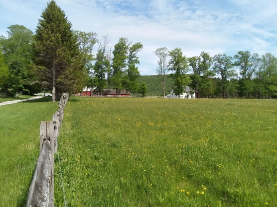 And the view from the top, where the yellow has leaped the fence, and changed from dandelions to buttercups.