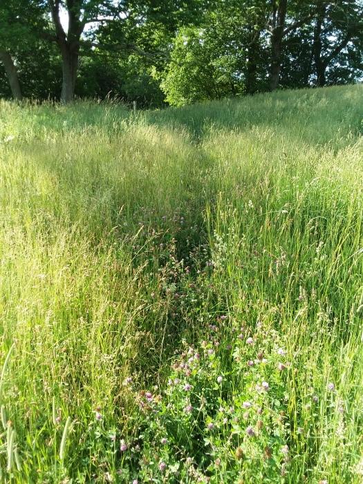 Walking through the tall grass.