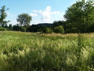 To hillside views.