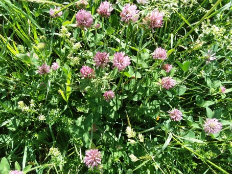 ... And bunches of clover.