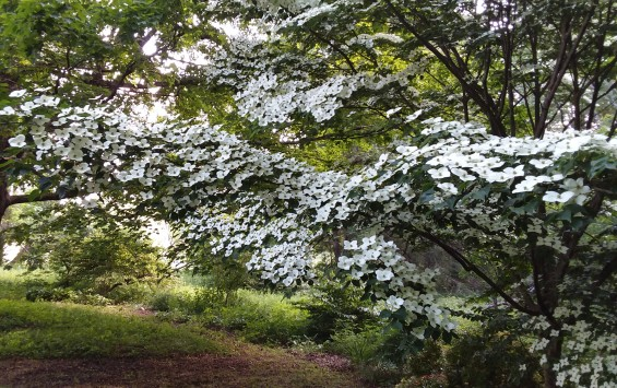 Brings me down for a closer look at the dogwood.