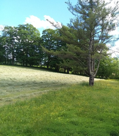 Hay arranged in rows, for the baler to come by.