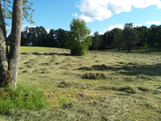 Where shadows of the setting sun cross the heaped hay.
