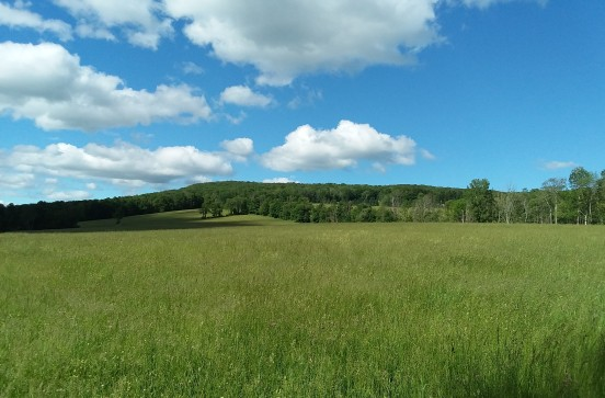 ... We cross the road to the middle field, with upper field visible to right of tree line.