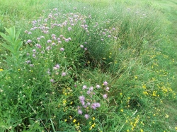 Bordered by banks of wildflowers.