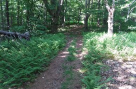 This trail was widened by a four-wheel vehicle...
