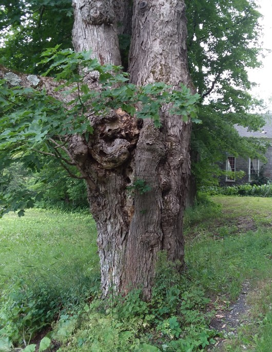 And past the scarred trunk of this still-standing old tree.